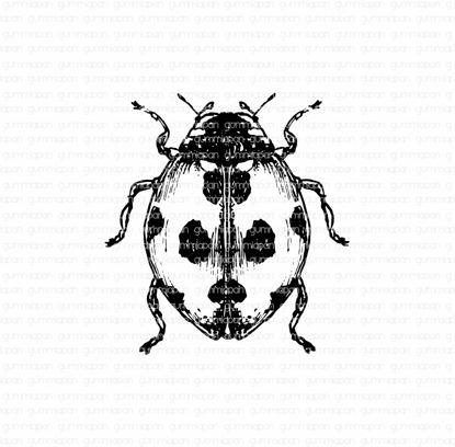 Groot lieveheersbeestje