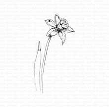Gele narcis